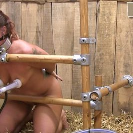 Fayth – first milking session