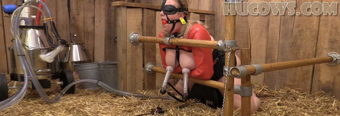 HuCow 38 – Sybian and goat milker